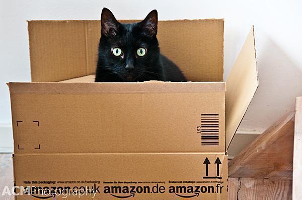 Amazon Ships Everything These Days...