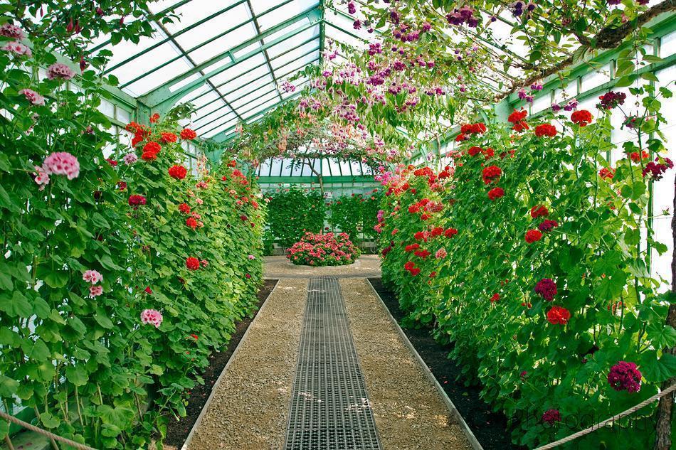 Belgian Royal Greenhouses