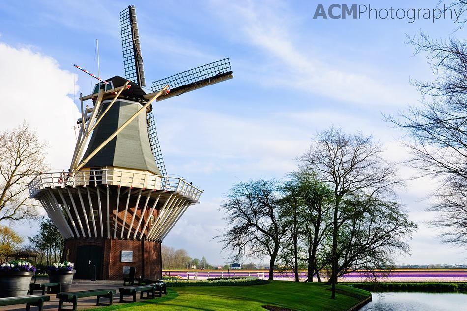 Windmill overlooking the bulb fields of South Holland
