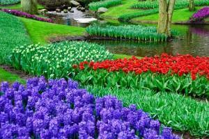 Keukenhof Tulip Gardens 2010 | Expat Life in Belgium, Travel and ...