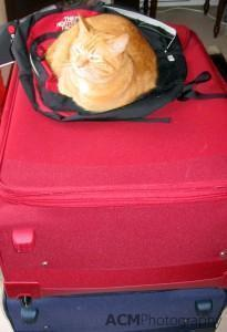 Not an appropriate cat carrier