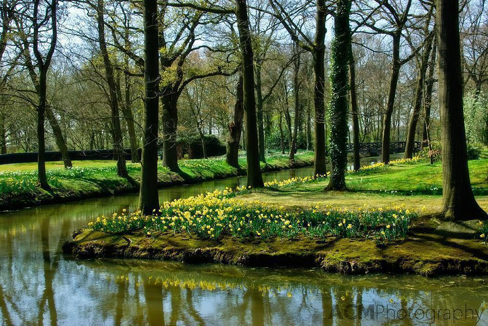 Daffodils bloom beside the canals