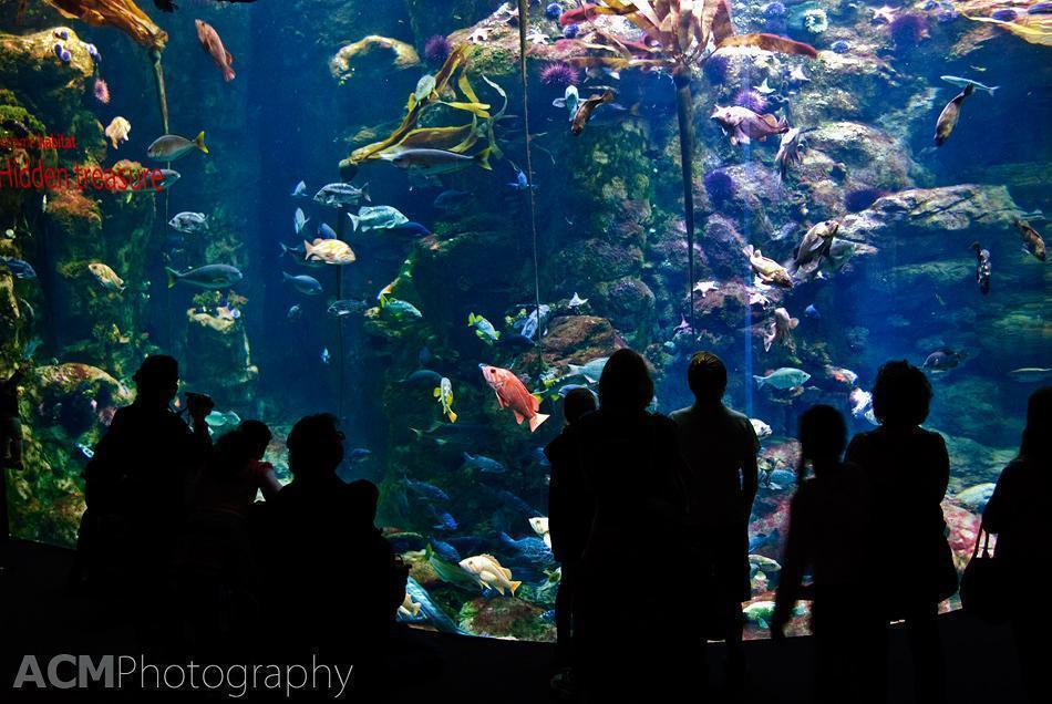 Visiting the Aquarium at the California Academy of Sciences in San Francisco