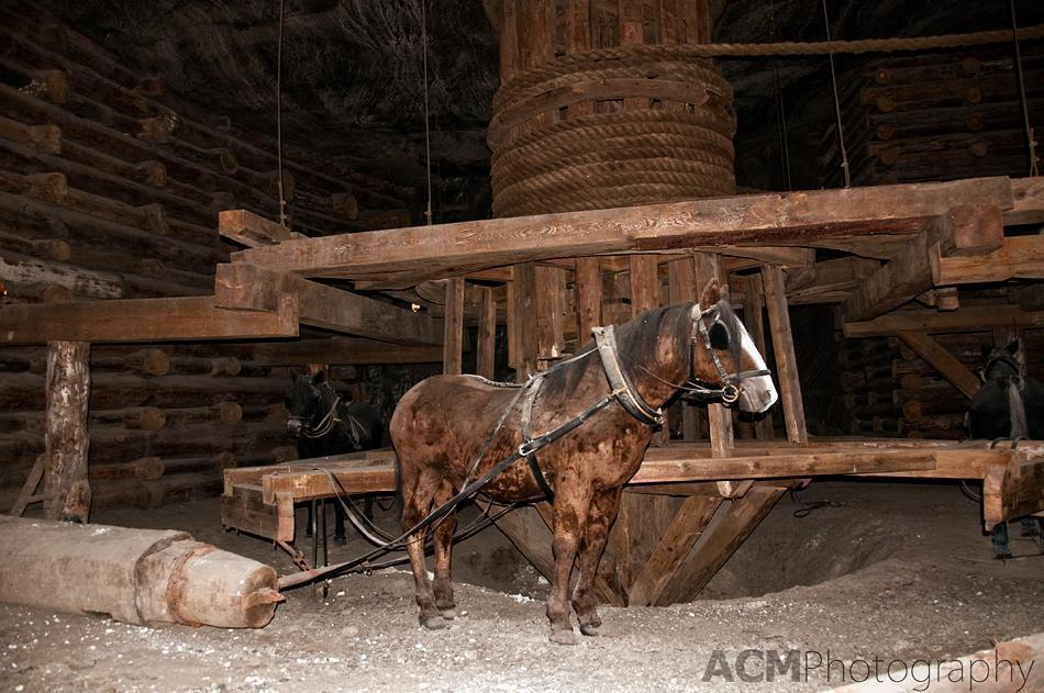 Horses in the Mine