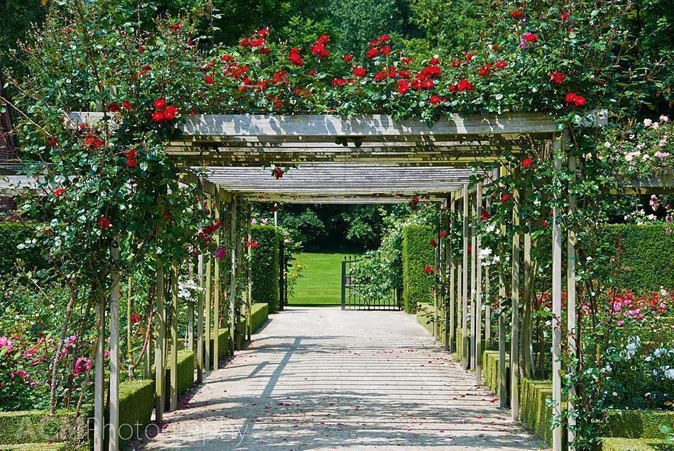 Rose Trellis in Coloma Rose Garden