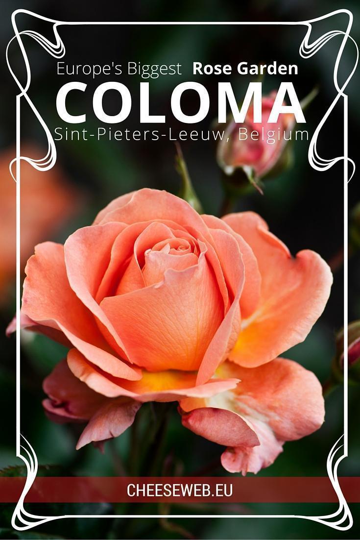 Europe's Largest Rose Garden, Coloma Garden in Sint-Pieters-Leeuw, Belgium