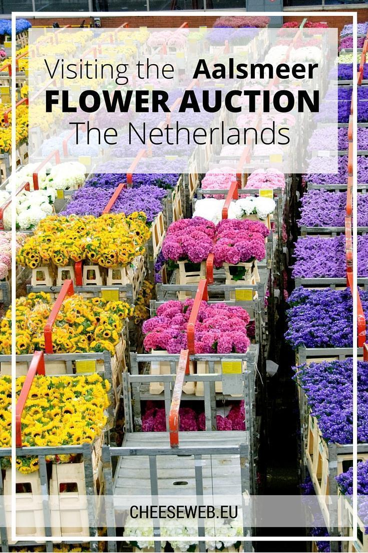Visiting the Aalsmeer Flower Auction, The Netherlands