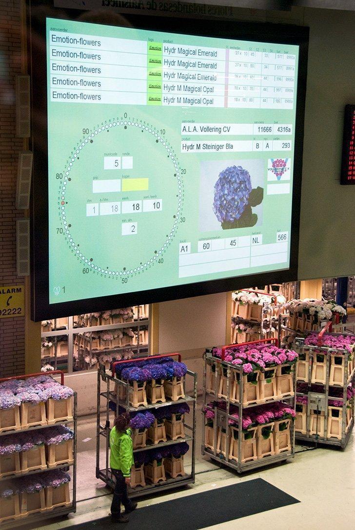 Dutch flower auction aalsmeer