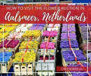 Owned by Royal FloraHolland, the Aalsmeer Flower Auction in The Netherlands is the worlds largest flower distribution centre. It's an easy day-trip from Amsterdam. We'll show you how to get there and what to expect.