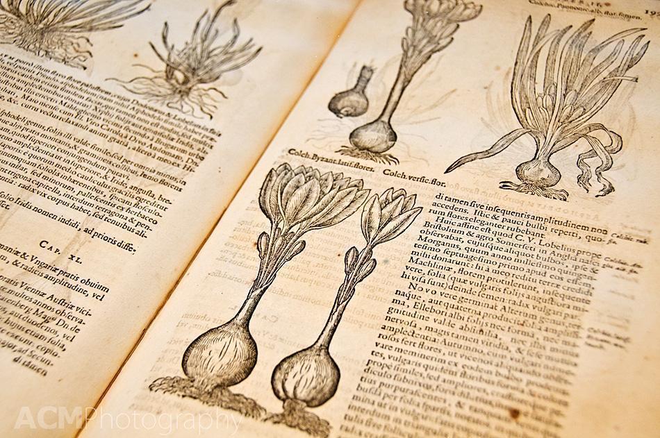 Botanical text by Carolus Clusius