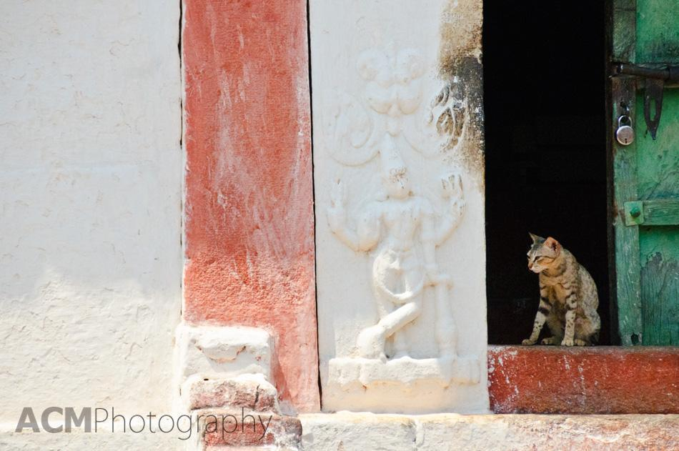 A temple cat at the Bhoganandishwara Temple