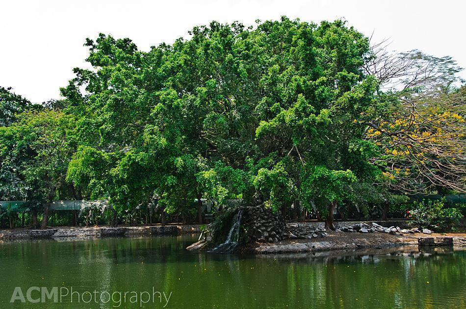 Taj Kumarakom Bird Sanctuary