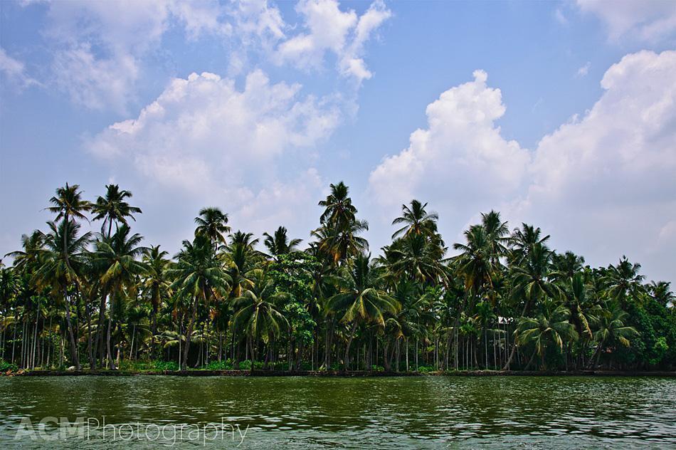 Kerala's giant palm trees