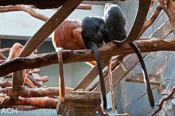 Monkey Tails!