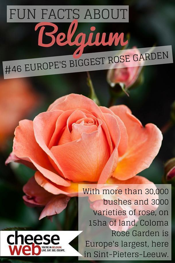 Belgium is home to Europe's largest Rose Garden