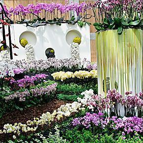 Orchids in the Villa Flora - Floriade 2012