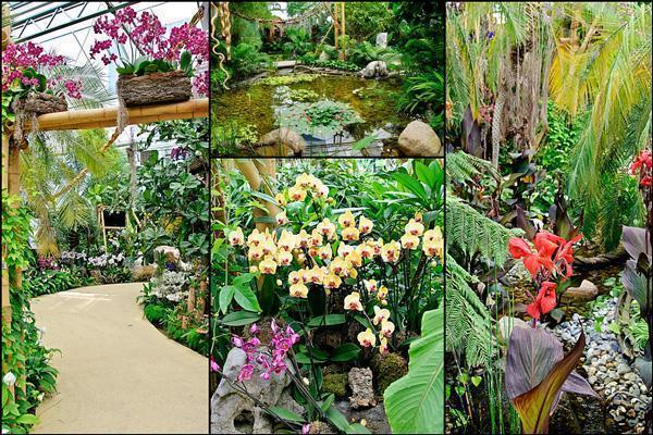 Inside the 'tropical treasures' pavilion