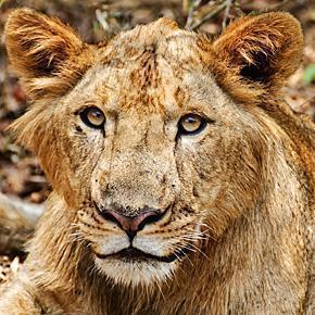 Our ten Favourite Photos of Animals