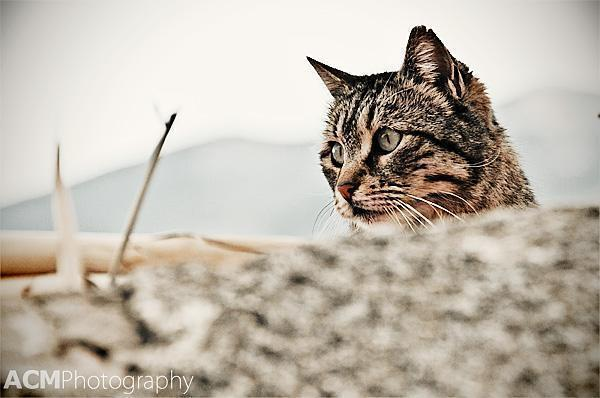 Cat near the Acropolis in Athens, Greece
