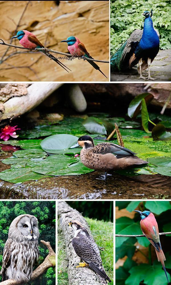 The birds of Pairi Daiza