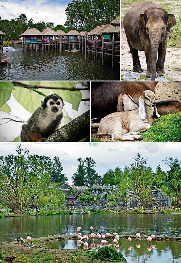 A few more sights at Pairi Daiza
