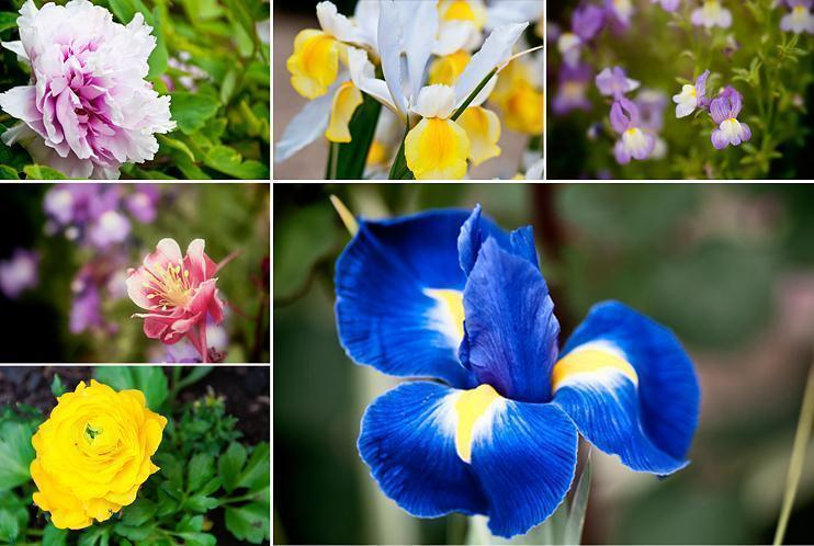 Flowers in the Generalife Gardens