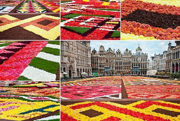 Brussels Flower Carpet Details