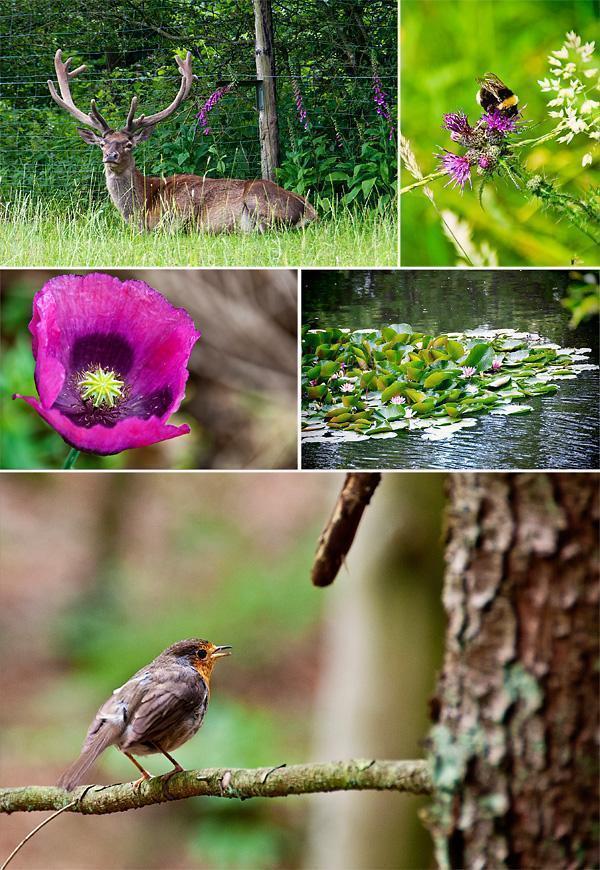 Nature all around us in the Hautes Fagnes