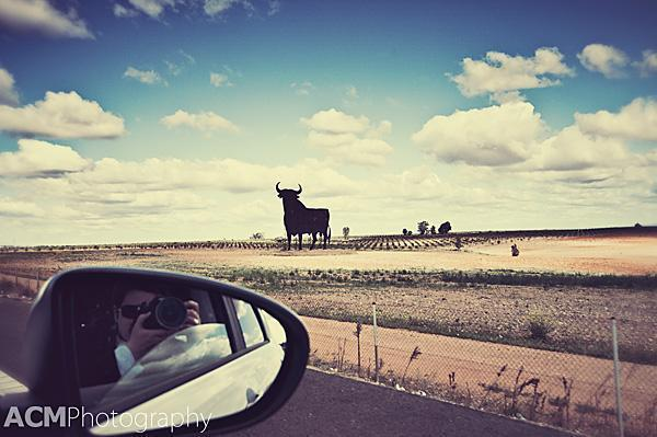 The Osborne Bull overlooks the Andalusian countryside