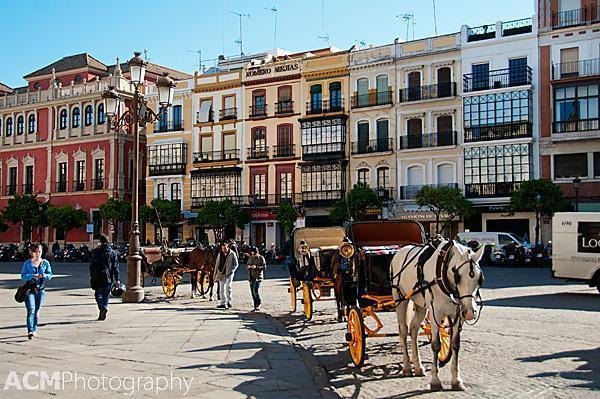 Horses behind the Town Hall of Seville
