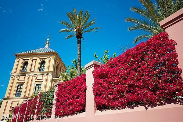 Bougainvillea in Seville
