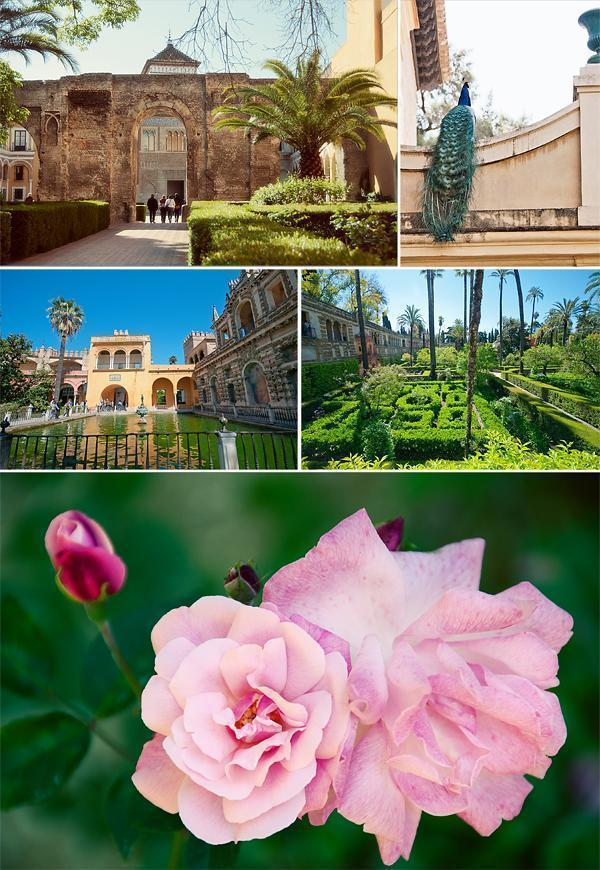 The gardens and grounds of the Alcazar