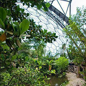 The Tropical Rainforest Biome at the Eden Project