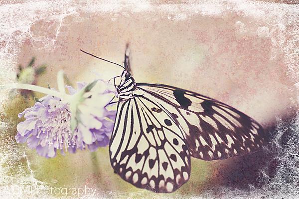 Butterfly House Dartmoor