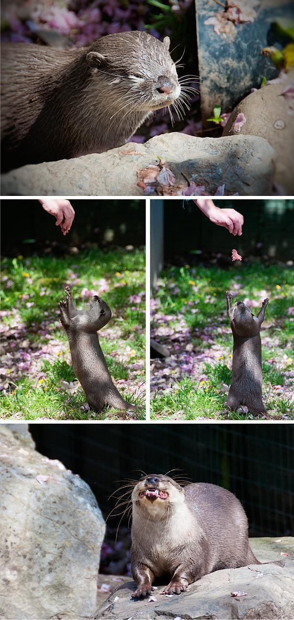 Feeding Time at the otter sanctuary