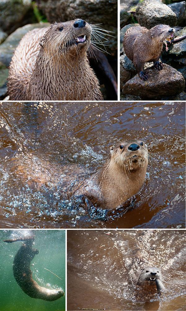 Otter Sanctuary in Dartmoor