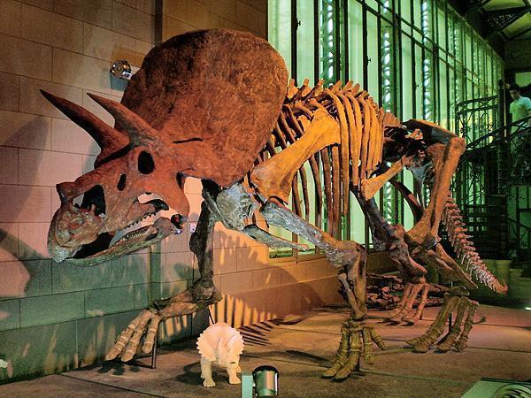 Dinosaurs Galore at the Musée des Sciences Naturelles, Brussels