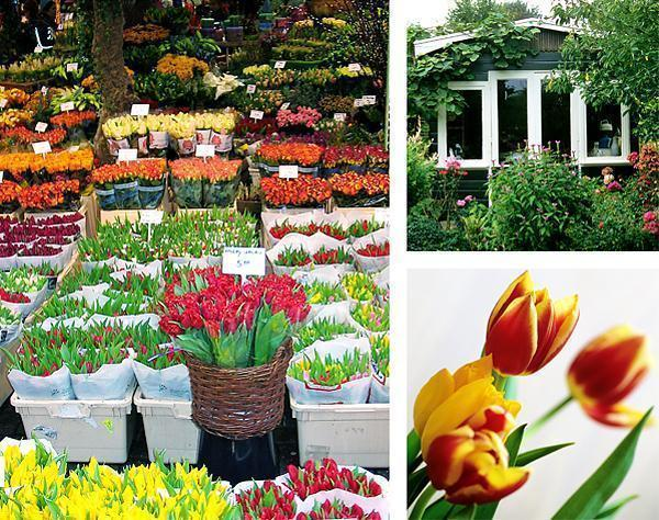 Tulips and gardens in Amsterdam