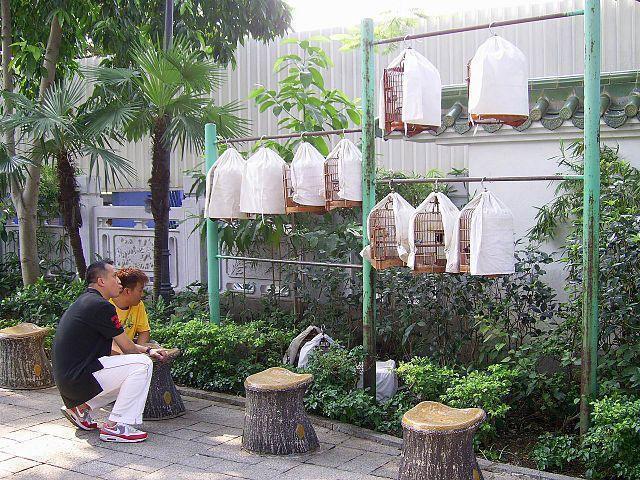 Listen to song birds at Yuen Po Street Bird Garden