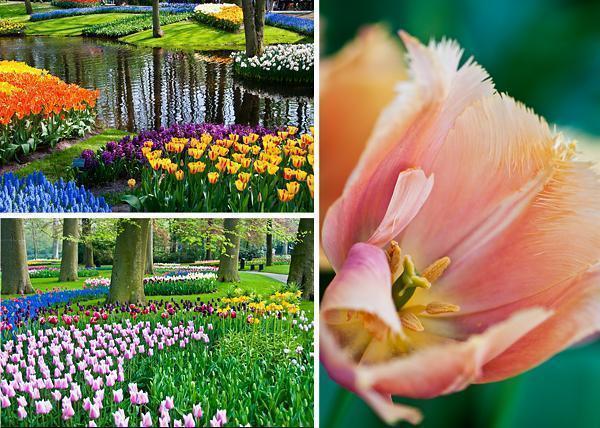 Keukenhof Tulip Gardens in the Netherlands