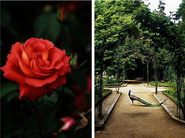 Valladolid's Rose Garden and Campo Grande