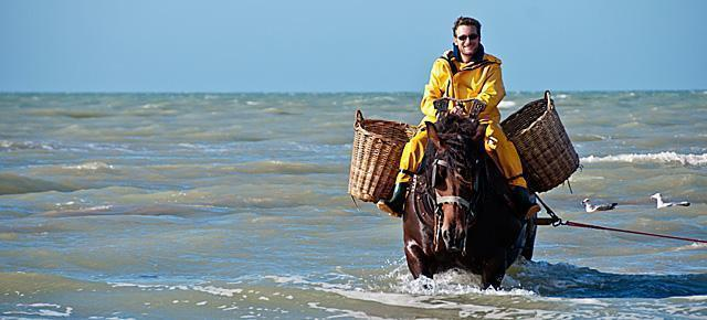 Shrimp Fishing on Horseback at Oostduinkerke, Belgium