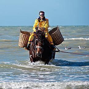 Belgian tradition - Shrimp fishing on horseback at Oostduinkerke, Belgium
