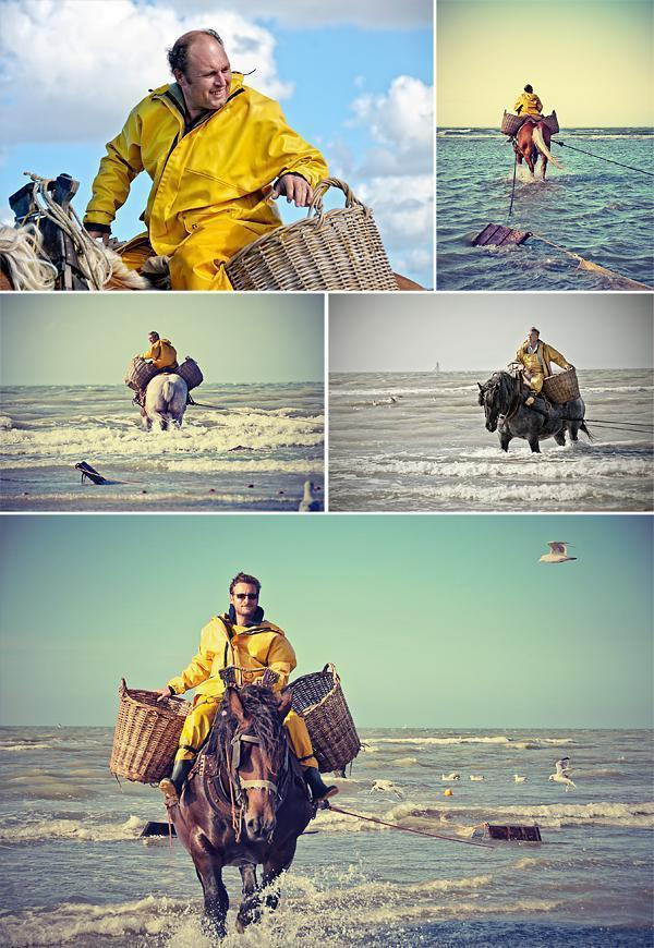 Into the sea - The shrimp fishermen and their horses get to work.