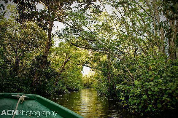 Cruising through the Klias Wetlands