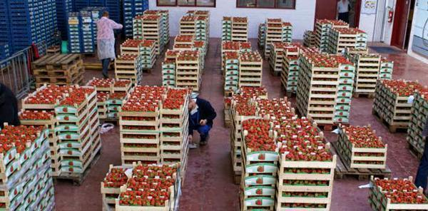 Wépion Strawberry Auction House