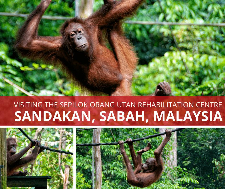 Visiting Sepilok Orang Utan Rehabilitation Centre in Sabah Malaysia