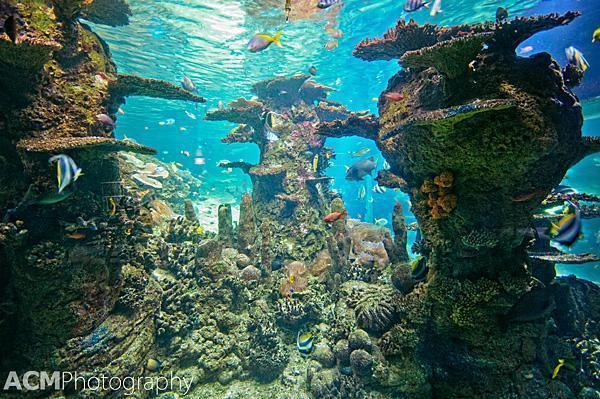 The Coral Lagoon from below