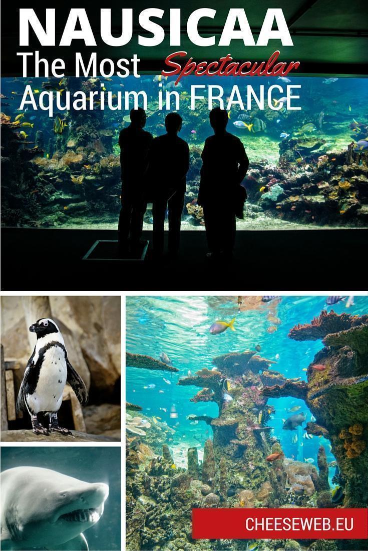 The NAUSICAA Aquarium, in Boulogne-Sur-Mer, is France's largest aquarium.