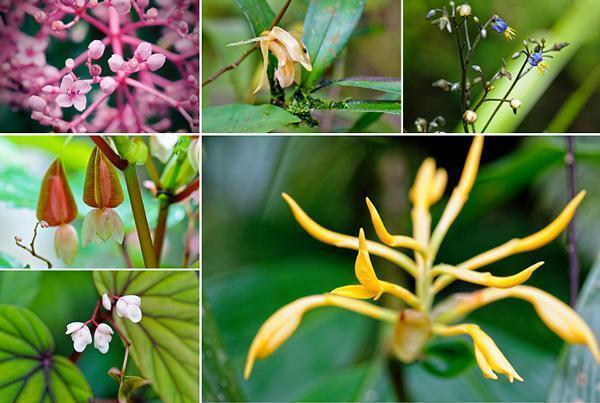 A variety of Kinabalu's brilliant blooms